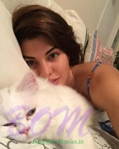 Jacqueline Fernandez selfie with her cat mate