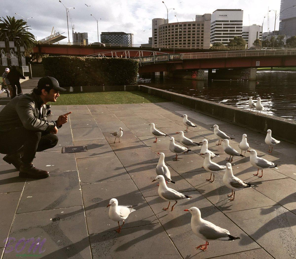 Sushant Singh Rajput last minute instructions to seagulls